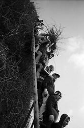 Operai al lavoro per la realizzazione della FÚcara: essi, posizionati sulla scala, si passano le fascine di tralci di vite. La FÚcara, la cui costruzione inizia la mattina del 7 gennaio, Ë dedicata a Sant'Antonio Abate ed Ë costituita da un falÚ realizzato con fascine di tralci di vite (sarmente) recuperate dalla rimonta dei vigneti. Sulla cima della fÚcara, la mattina della Vigilia, viene issata un'artistica bandiera sulla quale Ë l'immagine del Santo. L'accensione della FÚcara avviene attraverso una batteria-fiaccolata. Una volta accesa, la FÚcara arde tutta la notte dando vita al fenomeno detto delle fasciddre, le faville che, nell'aria, somigliano ad una pioggia di fuoco. (fonte http://www.comune.novoli.le.it/focara/storia_focara.php).