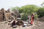 Trafic d'épouse 11032019. Haryana. Biwhat district. Village. Vie quotidenne avec des femmes au travail agricole.