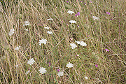 close up of wild flowers in a grassy field with various wild grasses