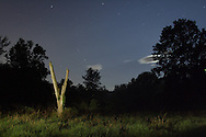 Florida, NY - Trees, grass and stars at night on June 27, 2009. The tree and grass in the foreground were lit by a flashlight during the 30-second exposure.