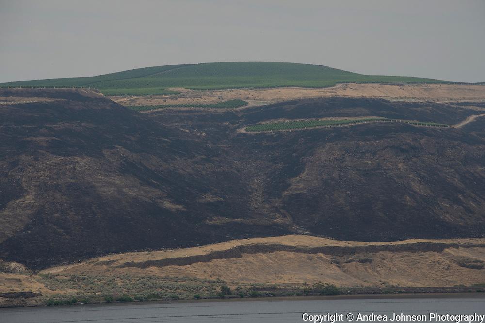 Wildfire during extreme heatwave early season in Washington burns area surrounding Benches Vineyard, Horse Heaven Hills, Washington