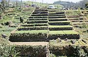 Intensive subsistence terraced farming near Nuwara Eliya, Central Province, Sri Lanka, Asia