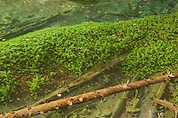 Underwater vegetation in the Black River Crna Rjieka, crystal-clear water, Plitvice National Park, Croatia
