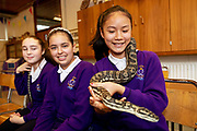 12/11/2018 Repro free: Galway Science and Technology Festival, the largest science event in Ireland, runs from 11-25 November featuring exciting talks, workshops and special events. Full programme at GalwayScience.ie. Amoy Meng,  from Our  Lady's College Galway  with a Python from The Bug Doctors collection ( Dr Michel Dugon- NUI Galway) Photo:Andrew Downes, Xposure.