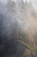 Fog at Heceta Head Oregon