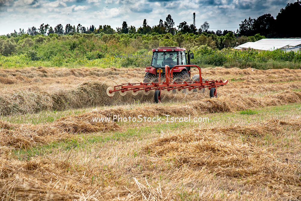 Farmer on a tractor is turning hay for better drying before bailing