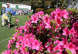 April 1, 2018 - Augusta, GA, USA - The azaleas are in full bloom by the first fairway on Sunday, April 1, 2018 for the Masters at Augusta National Golf Club in Augusta, Ga. (Credit Image: © Curtis Compton/TNS via ZUMA Wire)