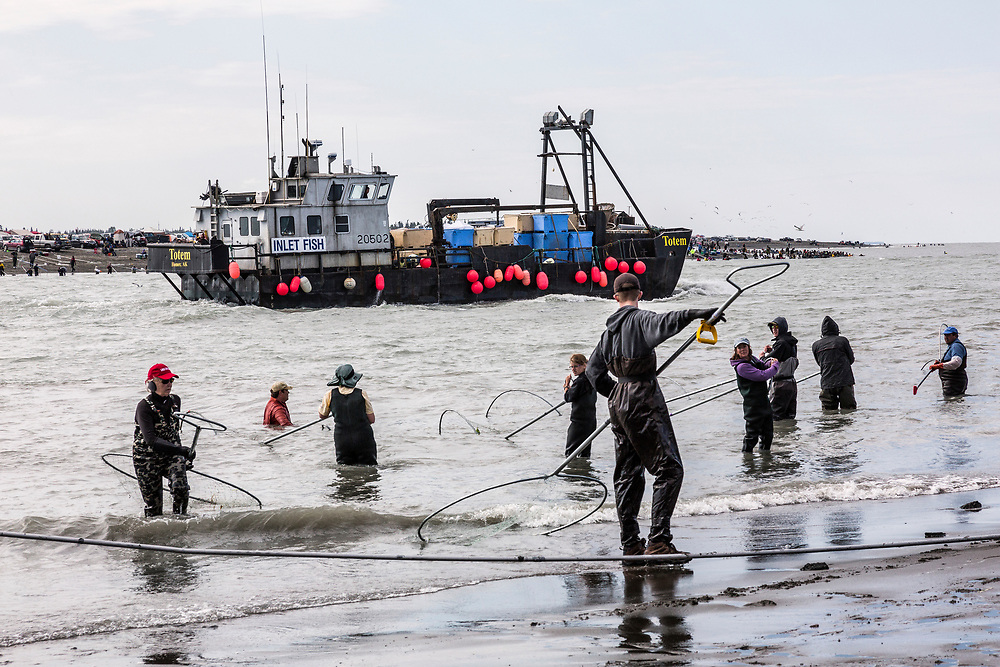Alaska.  Dipnetters work along both shores of the mouth of the Kenai River in July as a tender passes out the channel into Cook Inlet.  The short dipnetting personal use fishery is immensely popular as thousands of visitors swell the local population of the town and surrounding area.