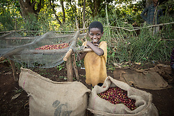 Farmers bring their coffee to sell to a middleman in the village of Choche, in Jimmu In Ethiopia.