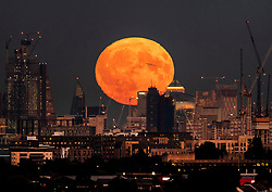 © Licensed to London News Pictures. 24/09/2018. London, UK. An aircraft passes in front of the near full Harvest moon as it rises over London. It is named the Harvest Moon as it is the nearest full moon to the autumnal equinox as the last of the harvest is brought in. This state of the moon, waxing gibbous, is 98. 7% of tomorrow's full moon. Photo credit: Peter Macdiarmid/LNP