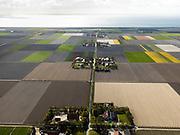 Nederland, Flevoland, Noordoostpolder, 16-04-2012; Onderduikerspad, met bloembollenvelden en akkers die op het punt van bloeien staan. Boerderijen en kavels op regelmatige onderlinge afstand, voorbeeld van moderne grootschalige polder met rationele verkaveling. De aanleg van de polder maakte deel uit van de Zuiderzeewerken (plan Lely) en viel in 1942 droog. De meeste boerderijen (en dorpen) zijn van na de tweede wereldoorlog. The northeast polder (NOP), is an example of modern large-scale polder with rational allotment. The construction of the polder was part of the Zuiderzee Works (Lely plan), in 1942 the polder was dry. Most of the building, farmhouses and villages, is post-war...QQQ.luchtfoto (toeslag), aerial photo (additional fee required).foto/photo Siebe Swart