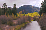 Early Spring, Cottonwoods and Alders Leafing Out, Indian Creek, Flournoy Bridge, Heart K Ranch, Upper Genesee Valley, Fir Forest