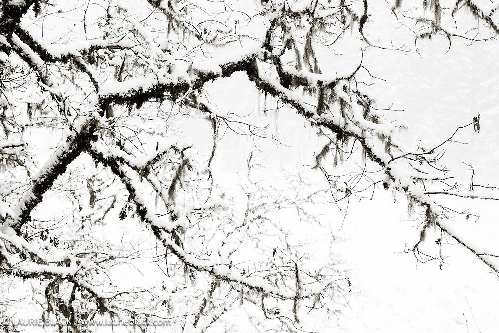 B&W winter landscape fine art photo 4