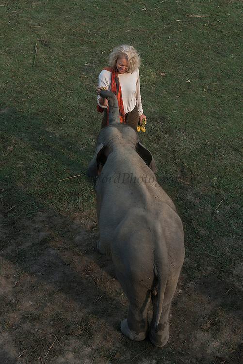 Asian elephant (Elephas maximus) & Renee Bish<br /> Kaziranga National Park<br /> Assam<br /> North East India<br /> UNESCO World Heritage Site<br /> ENDANGERED