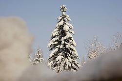 05.12.2010, Graz, AUT, Feature, im Bild ein verschneiter Baum vor blauem Himmel, EXPA Pictures © 2012, PhotoCredit: EXPA/ Erwin Scheriau