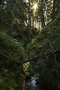 Small stream with steep mossy canyon overgrown with ferns in boreal coastal forest, near Melnsils, Kurzeme seacoast, Latvia Ⓒ Davis Ulands | davisulands.com