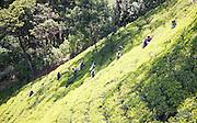 Female workers picking tea leaves on hillside, Nuwara Eliya, Central Province, Sri Lanka, Asia