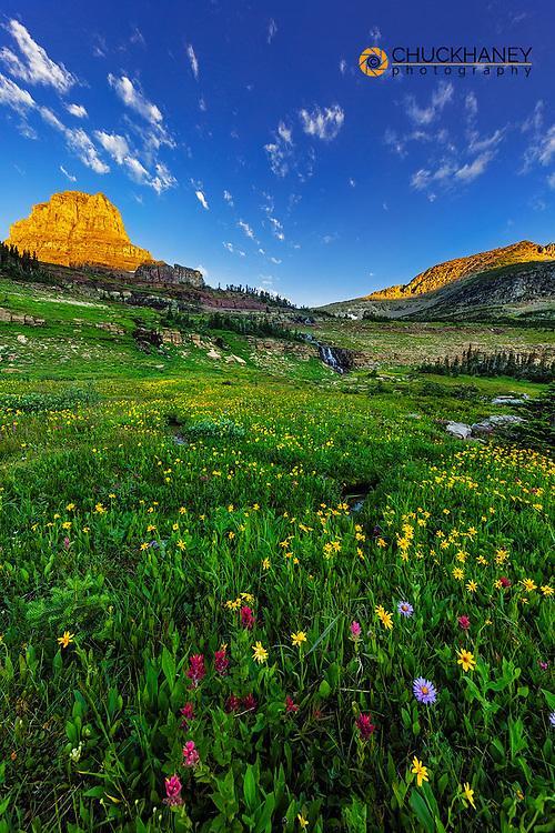 Alpine wildflower meadow at Logan Pass in Glacier National Park, Montana, USA