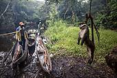 Bushmeat trade in the Congo