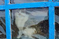 Mongolie, province de Bayan-Olgii, chat dans une famille kazakhe // Mongolia, Bayan-Olgii province, cat in a Kazakh family