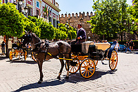 Horse carriage outside Seville Cathedral, Seville, Andalusia, Spain.