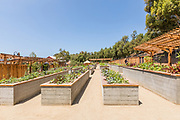 Raised Garden Beds with Fresh Produce at Aliso Viejo Ranch