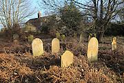 Old overgrown gravestones former Baptist church graveyard, Sutton, Suffolk, England, UK