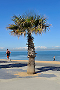 Joggers and palm on beach. St Kilda, Melbourne, Australia