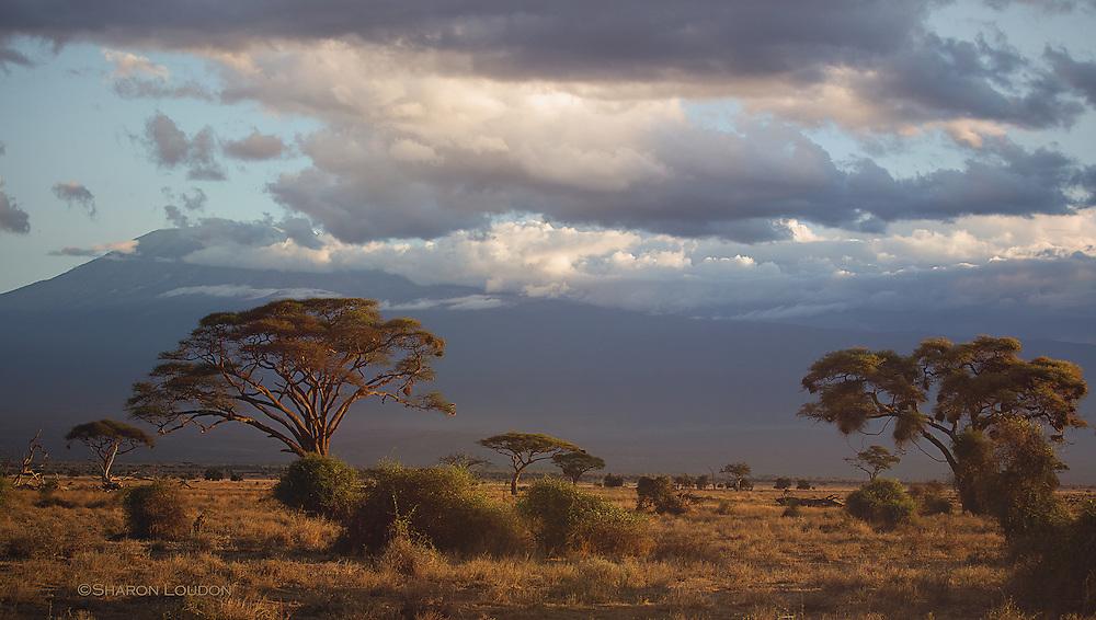 Sunset casts glow on Mount Kilimanjaro
