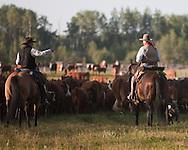 Photo Randy Vanderveen.Near Debolt, Alberta, July 22/08.Cowboys discuss cattle they are herding toward a corral.
