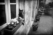 A black cat sits on a windowsill in an old village in France.