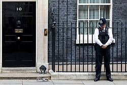 © Licensed to London News Pictures. 26/09/2017. London, UK. A squirrel runs past No 10 Downing Street. Photo credit : Tom Nicholson/LNP