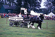 Buchanan's Black and White Scotch whisky traditional dray horses at agricultural country show in Biggar, Scotland, UK 1974