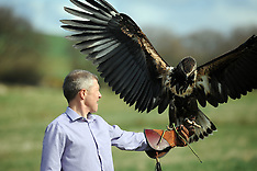 Willie Rennie Falconry | Cluny | 7 April 2016