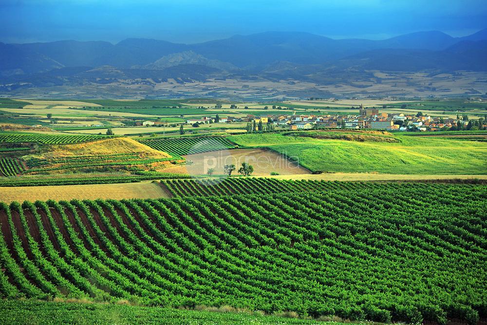 Viñedos. Azofra. La Rioja ©Daniel Acevedo / PILAR REVILLA