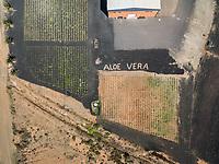 FUERTEVENTURA, CANARY ISLANDS - 18 February 2018 : Aerial view of Aloe-vera plantation in Fuerteventura, Canary Islands.