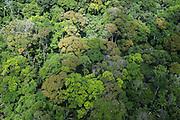 Rainforest Canopy<br /> Rupununi<br /> GUYANA<br /> South America