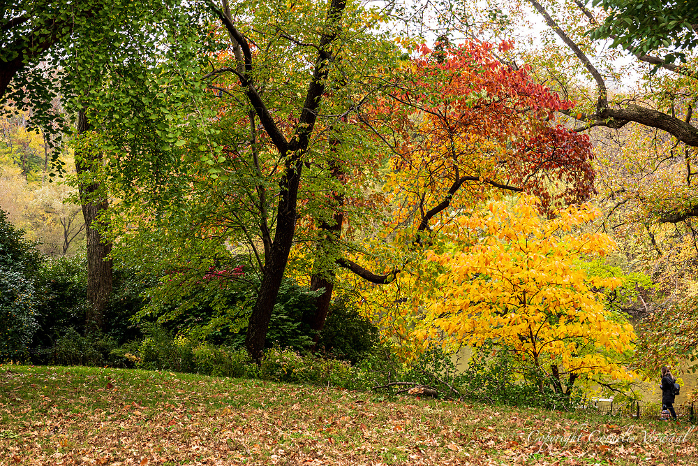 Autumn Colors on Cherry Hill in Central Park.
