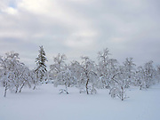 View of trees along the roadside in the snowy Winter landscape on 19th February 2020 in Lapland, Finland. The natural features and landscape of the fells have always enchanted hikers and the area offers magnificent fells and seemingly endless woodlands.