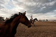 Will James Roundup, Ranch Rodeo, Wild Horse Roping, Nate Wald, Hardin, Montana.
