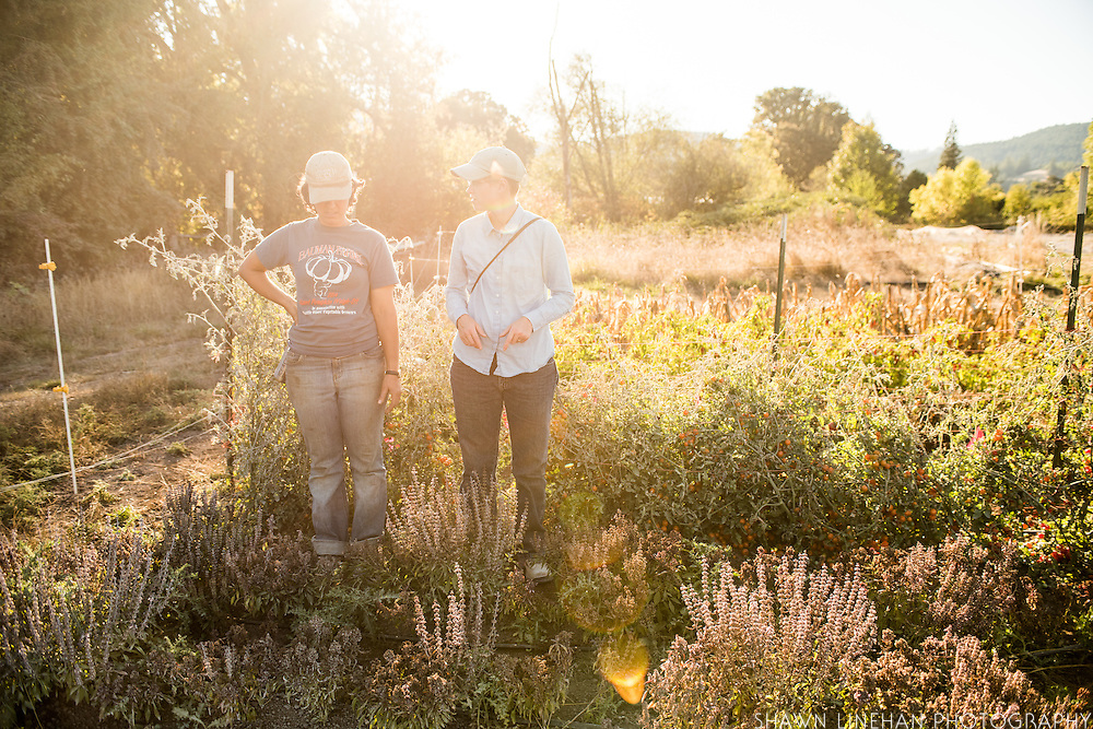 Sarah Kleeger and Julie Dawson discuss seed breeding at Adaptive Seeds Farm in Sweet Home, OR