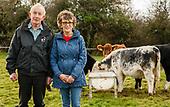 Anne Guest Bothar Cows