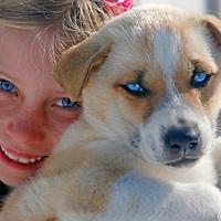 "North America, USA, Alaska, Skagway. Young girl enjoys meeting the dogs and puppies on a ""Glacier Dog-Sledding"" shore excursion in Alaska."
