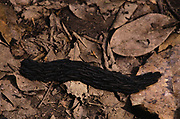 Clumping Caterpillars<br />