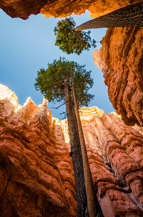 Looking up from the bottom of Wall Street in Bryce Canyon.