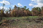Amazonian Rain forest fire, Brazil 2020