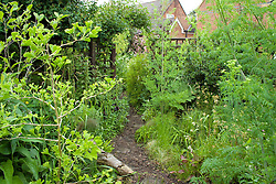 Arch through to wildlife friendly area from main garden