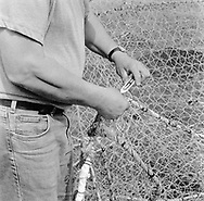 A salmon netter repairing 'jumper' nets in preparation for the nets to be stored away for the winter at the end of the season at Kinnaber, Angus.<br /> Ref. Catching the Tide 53/00/09 (4th September 2000)<br /> <br /> The once-thriving Scottish salmon netting industry fell into decline in the 1970s and 1980s when the numbers of fish caught reduced due to environmental and economic reasons. In 2016, a three-year ban was imposed by the Scottish Government on the advice of scientists to try to boost dwindling stocks which anglers and conservationists blamed on netsmen.
