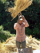 After drying on the upland field for several days, an Akha Cherpia ethnic minority man threshes the rice sheaves with a wooden threshing tool to remove the grain before carrying it back to the village in sacks.  Swidden cultivation or 'hai' in Lao consists of cutting the natural vegetation, leaving it to dry and then burning it for temporary cropping of the land, the ash acting as a natural fertiliser. Shifting cultivation practices, although remarkably sustainable and adapted to their environment in the past, have come under increasing stress in recent decades and are now starting to be a major problem in Lao PDR, causing widespread deforestation and watershed degradation.