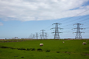 The first electrical pylons running out of Dungeness B nuclear power station in Kent, United Kingdom. The native Romney sheep inhabit all surrounding marshland. (photo by Andrew Aitchison / In pictures via Getty Images)